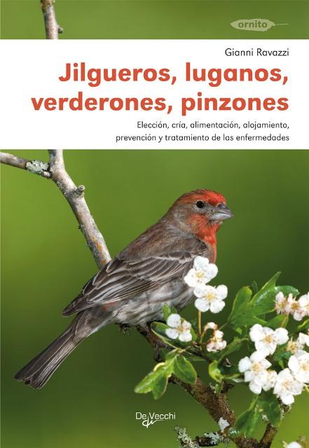 JILGUEROS, LUGANOS, VERDERONES, PINZONES - ANIMALES EN CASA